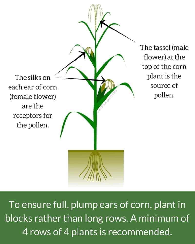 Fine Anatomy Of A Marijuana Plant Ideas Anatomy Ideas Yunokifo