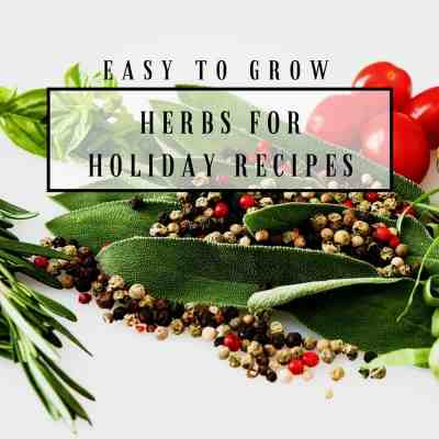 10 Easy To Grow Herbs For Holiday Recipes