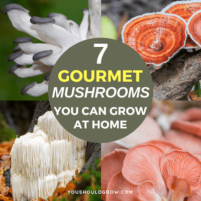 Mushroom growing kits featured image