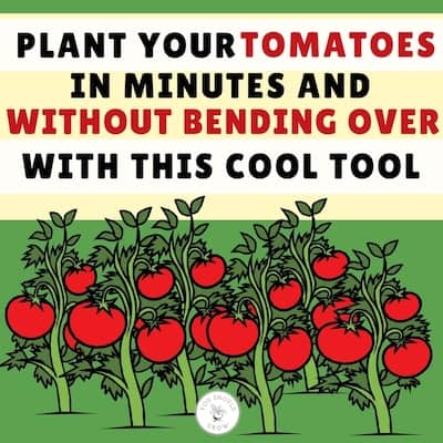drawing of red tomatoes on tomato plants with a green background and text that says: plant your tomatoes in minutes and without bending oer with this cool tool.