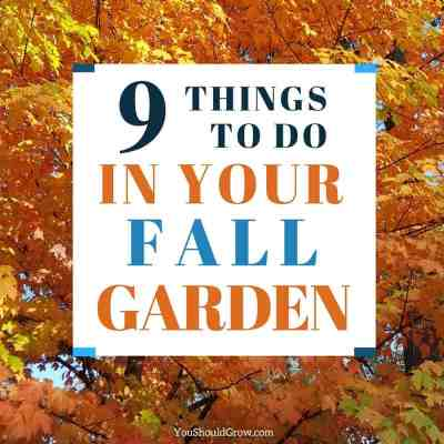 9 Fall Garden Tasks You Can't Ignore (Free Checklist)