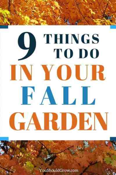 9 things you must to do in the fall garden