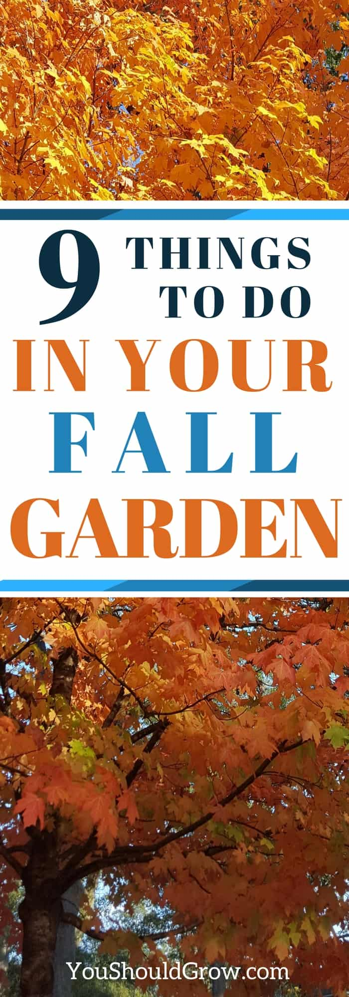 top 9 things to do in your fall garden you should grow