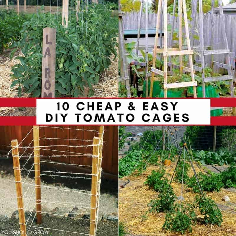 10 cheap easy tomato cages to diy this weekend you for Cheap c c cages