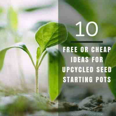 10 Free or Cheap Ideas For Upcycled Seed Starting Pots