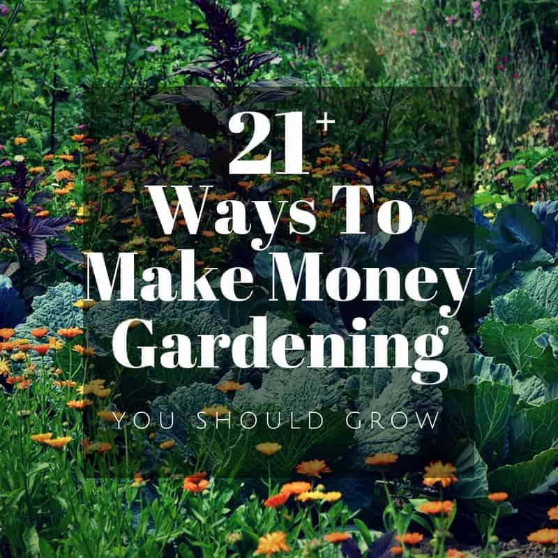 20 Ways To Spiff Up Your Backyard For Spring: Make Money Gardening: 29 Ideas To Start Earning Now!