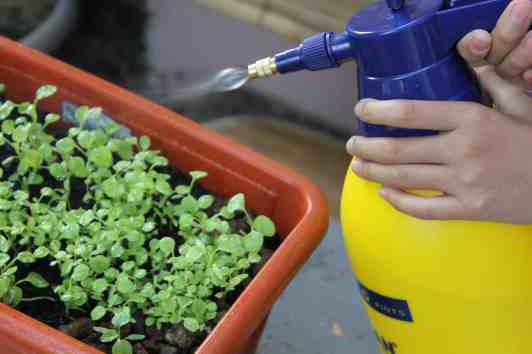 When growing vegetables in containers, you will get better results if you apply fertilizer regularly.