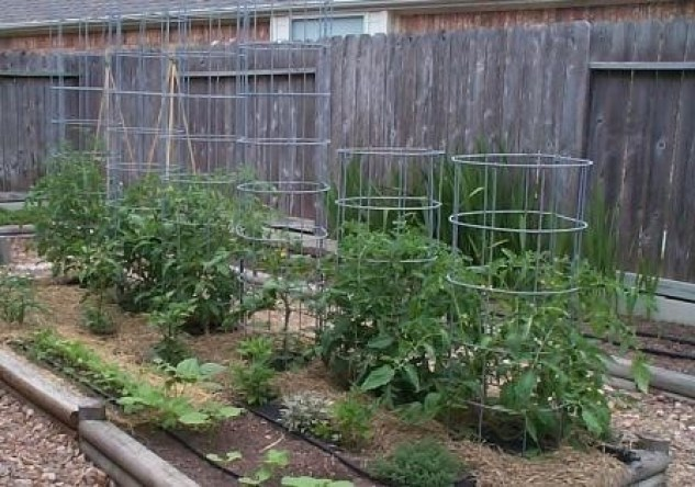 10 Cheap Amp Easy Tomato Cages To Diy This Weekend You