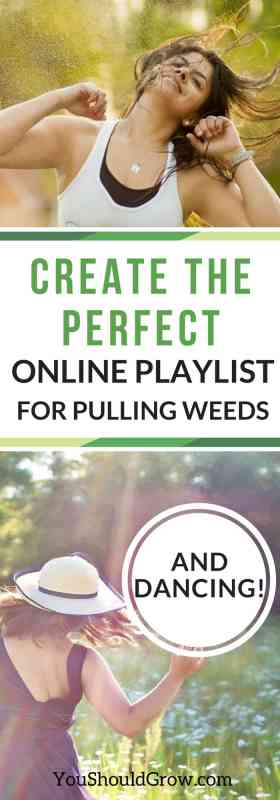 How to create the perfect song playlist for weeding with Amazon Music for prime memebers.
