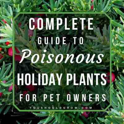 Complete Veterinary Guide To Poisonous Houseplants