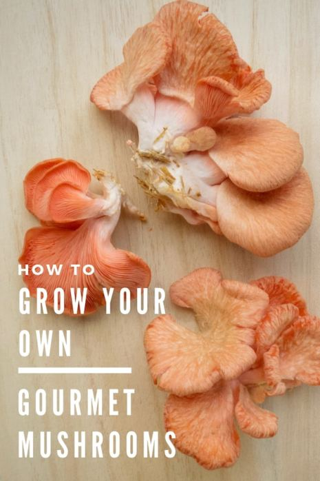 pink oyster mushrooms on a cutting board with text: how to grow your own gourmet mushrooms