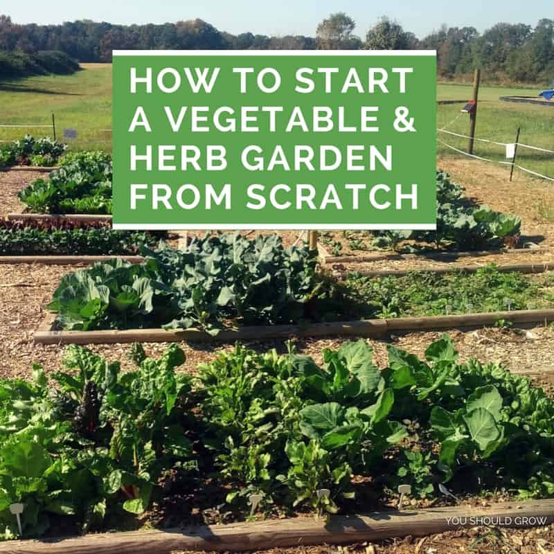How to start a vegetable and herb garden from scratch you should grow for How to start a garden from scratch