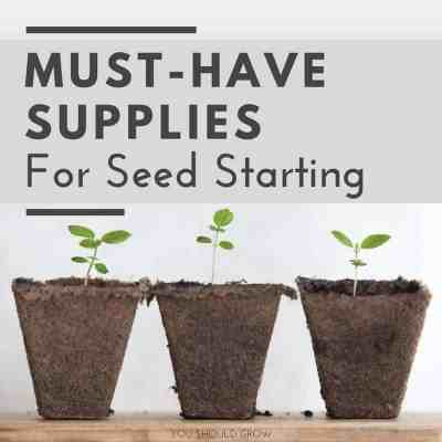 Must Have Supplies For Seed Starting