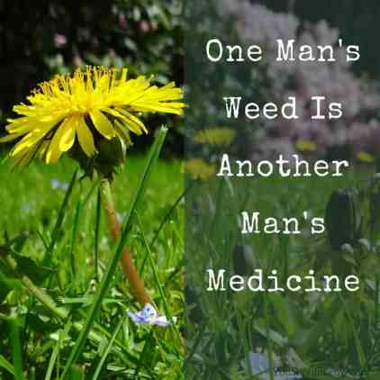 One man's weed is another man's medicine. youshouldgrow.com