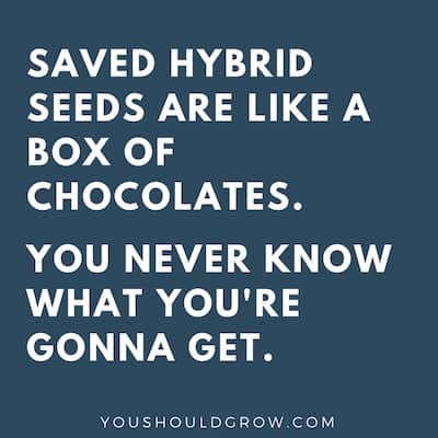 saved hybrid seeds are like a box of chocolates- you never know what you're gonna get. White text on blue background