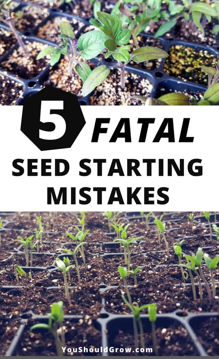 Seed starting mistakes: Starting seeds is so exciting, but what's a gardener to do if they're having problems germinating seeds? If you're wondering what went wrong, you may have made one of these fatal seed starting mistakes.