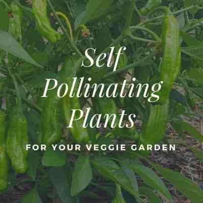 Self Pollinating Plants For Your Veggie Garden
