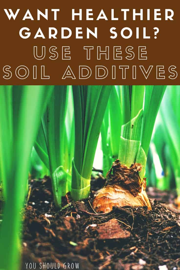 Gardening tips: use these soil additives to improve the health of your garden.