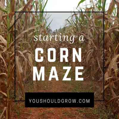 Thinking Of Starting A Corn Maze? Read This First