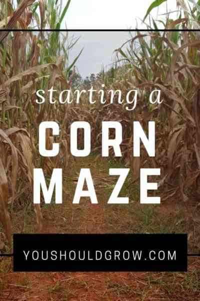 What is it really like to start a corn maze?