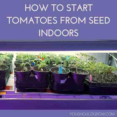 The Complete Guide To Starting Tomato Seeds Indoors