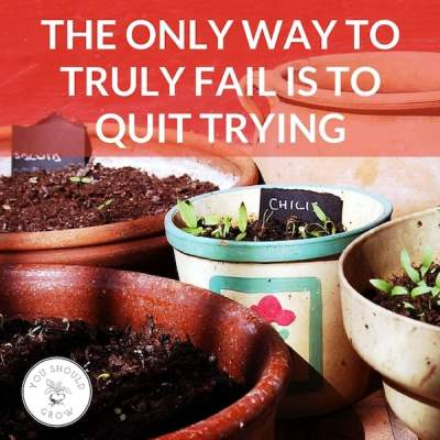 "Garden pots with seedlings sprouting and text overlay: ""The only way to truly fail is to quit trying"""