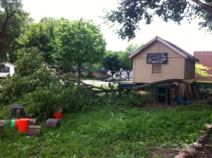 Last weekend, storms caused a tree to fall on the garden.