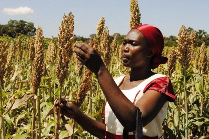 非洲的粮食生产