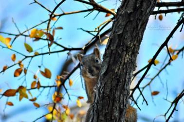 Creeper squirrel.