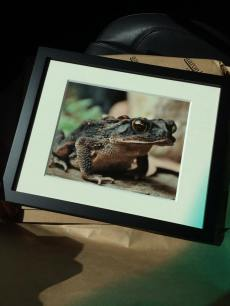 My Texas Toad framed and ready for Art7 Gallery.