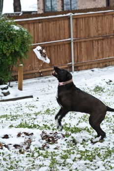 The girls chunked ice/snow balls at Anna. I am really surprised it didn't knock her out. She loves catching snowballs more than anything.