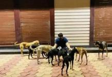 Kushagra Neb, who is Kushagra Neb, Kushagra Neb saving dogs, we__care_foundation