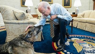 champ joe biden dog dies at 13 white house german shepherd
