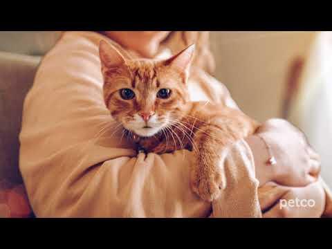 Cat Specialists (Petco)
