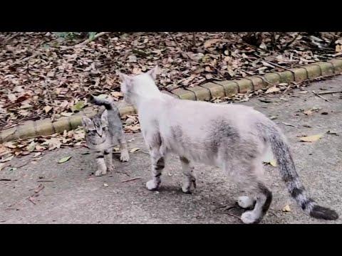 野良猫のママ猫をナデナデしたら逃げていった子猫を呼び戻してくれた