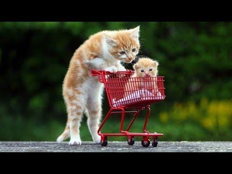 「かわいい猫」 笑わないようにしようとしてください – 最も面白い猫の映画 #316
