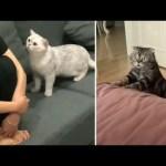 Reaksi Kucing Melihat Majikannya Sedih 😚 | Cute Cat Compilation ❤️