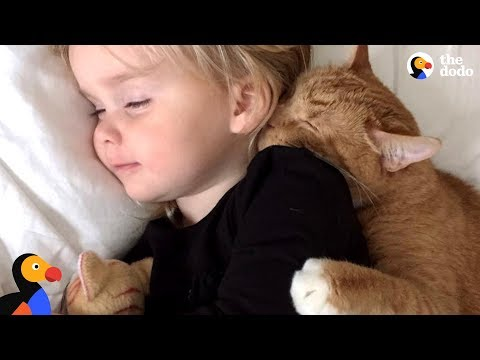 Senior Cat Loves These Little Girls More Than Anything – BAILEY | The Dodo
