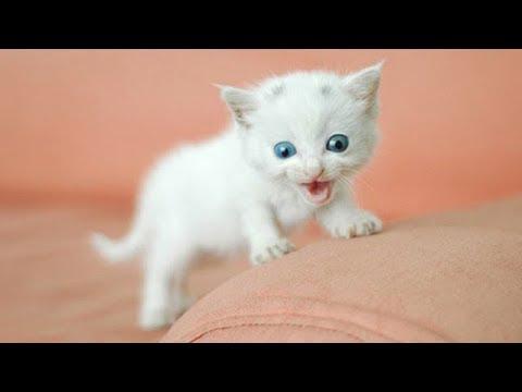 「猫かわいい」 すごくかわいい子猫 – 最も面白い猫の映画 #261