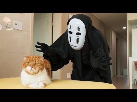 고양이 앞에 가오나시가 나타났을 때 반응
