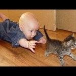 Funny Cats Annoying Babies and Babies Annoying Cats (PART 05)  – Youtube