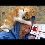 Angry Cats Vs People – CATS & Pets Compilation Videos