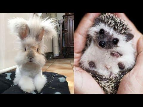 "Cute baby animals Videos ""Cat catch Jerry"" Cutest Animals #77"
