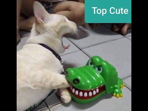 「面白い動物」あり得ないことをする犬, 猫・おもしろ犬
