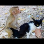 What Axel monkey doing on cat?, Monkey Axel rides on cat