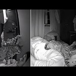 Man Sets Up Camera To See What His Cat Does While He's Sleeping And It's Hilarious