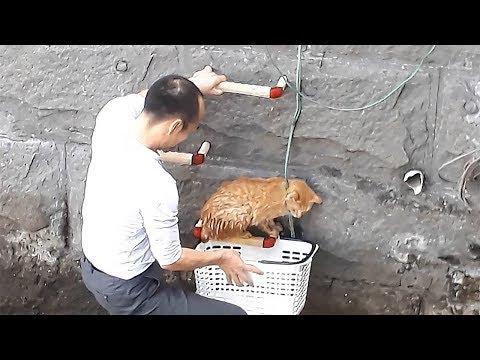右腕に猫、左手ではしご上る 救った男性「大丈夫っす」
