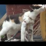 Kitten Dangles From Fishing Net On Mother's Neck | Animal In Crisis EP31