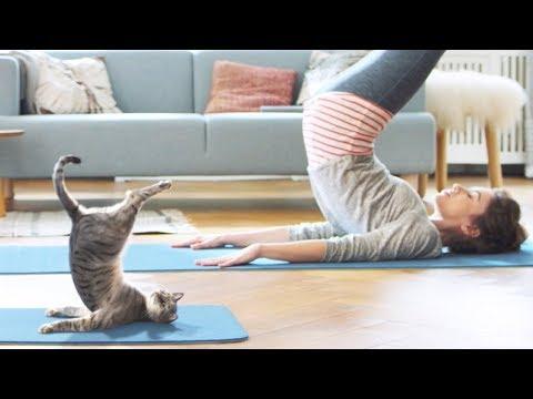 「面白い動物」あり得ないことをする犬, 猫・おもしろ犬, 猫のハプニング, 失敗集 #311
