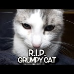 R. I. P.  Grumpy Cat – We'll never forget you.